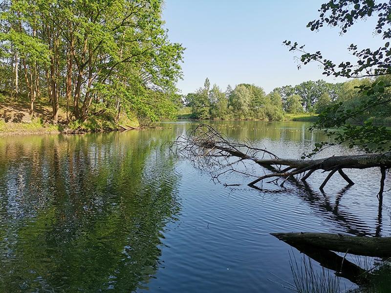 Ein umgekippter Baum ist auch im Sommer ein Hotspot zum Karpfenangeln. Hier finden die Fische in Ruhephasen Schutz.