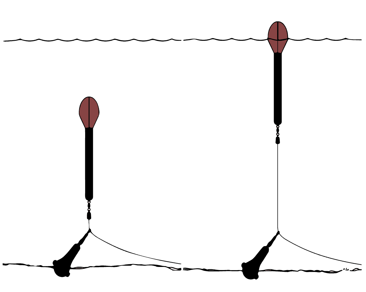 Karpfenangeln mit einer Lotpose