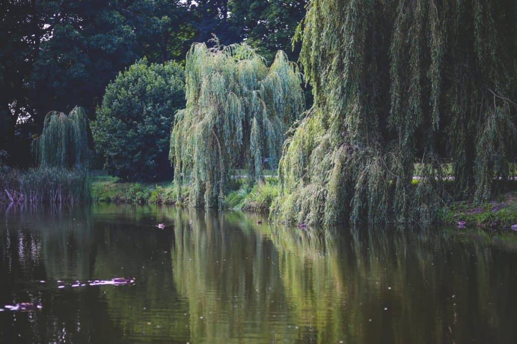Auch am Ufer lassen sich gut Karpfenfangen. Besonders im Sommer sind die Ufer ein beliebter Platz für Karpfen.