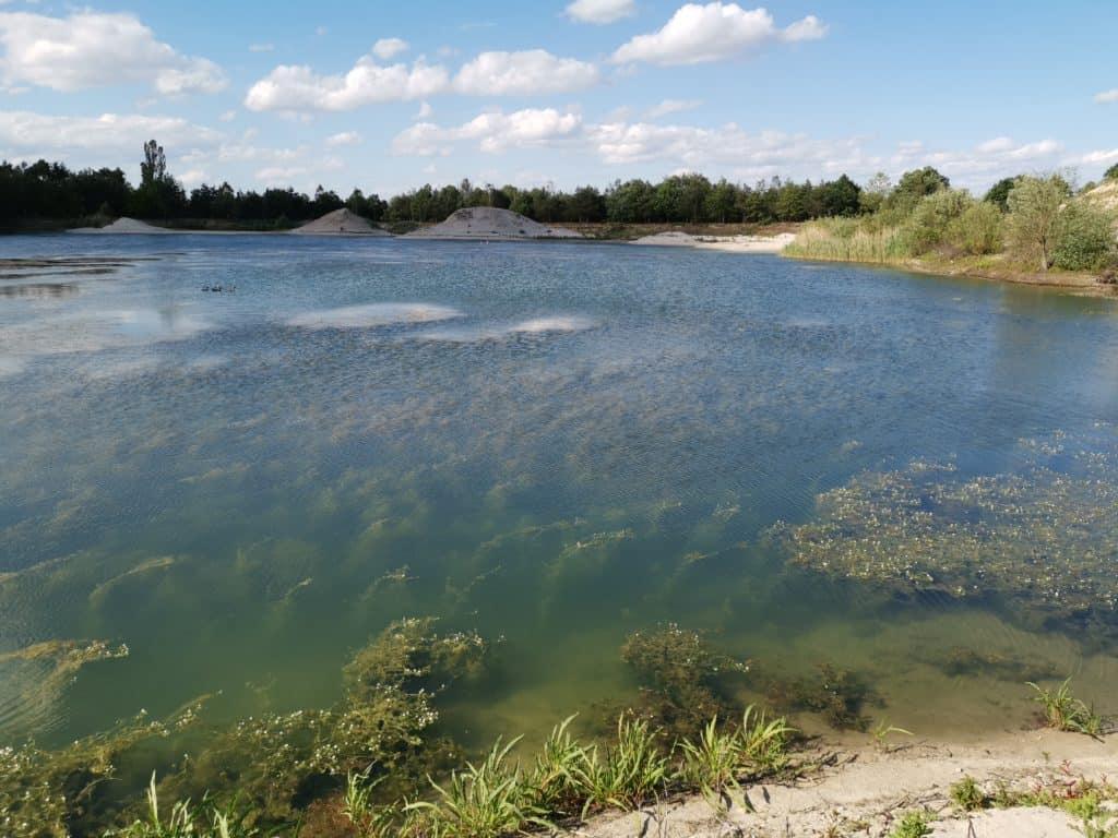 Stark verkrauteter Baggersee: hier ist es schwer zu Loten oder den Gewässergrund zu erkunden.