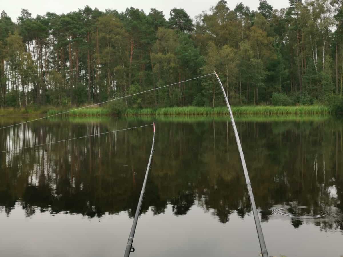 Feederrute um auf Karpfen zu angeln