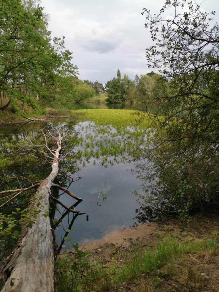 Im Sommer ist das Wasser oft schon warm und es gibt viel natürliche Nahrung für die Karpfen.