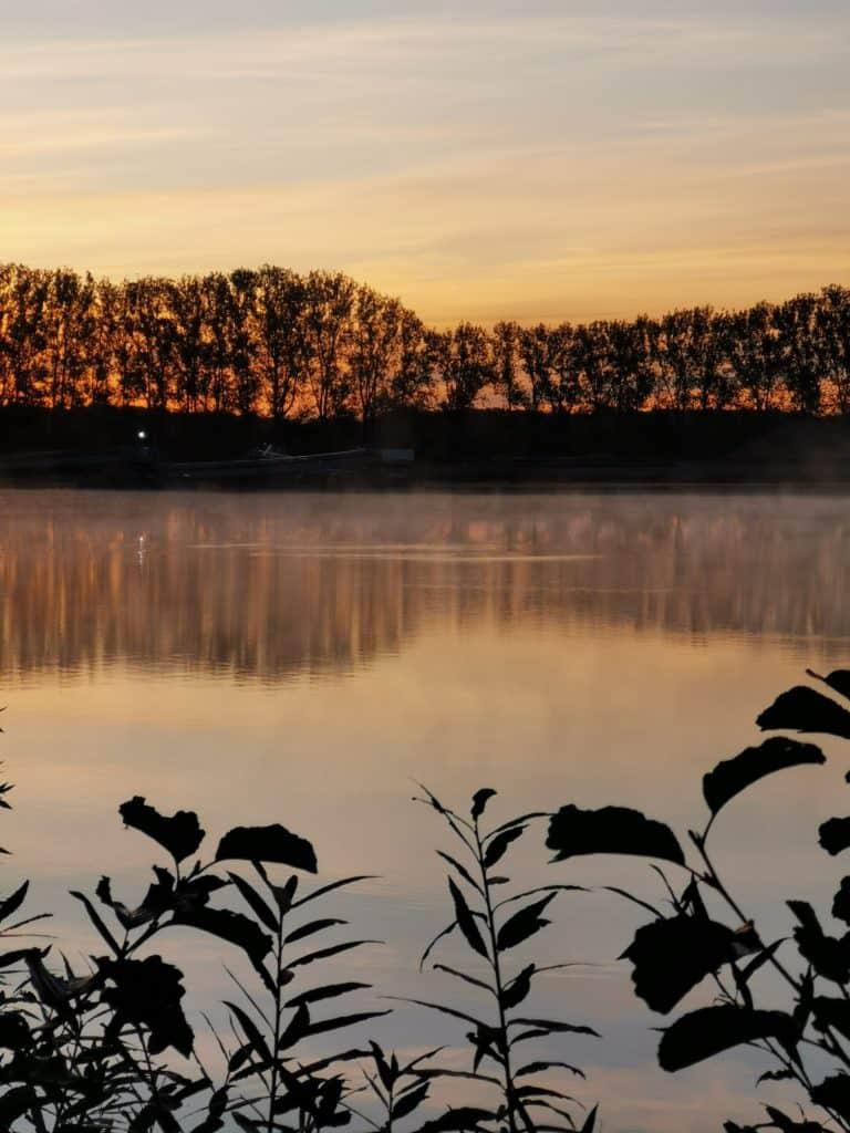 Ein Karpfen hat sich am frühen Morgen durch Springen gezeigt.